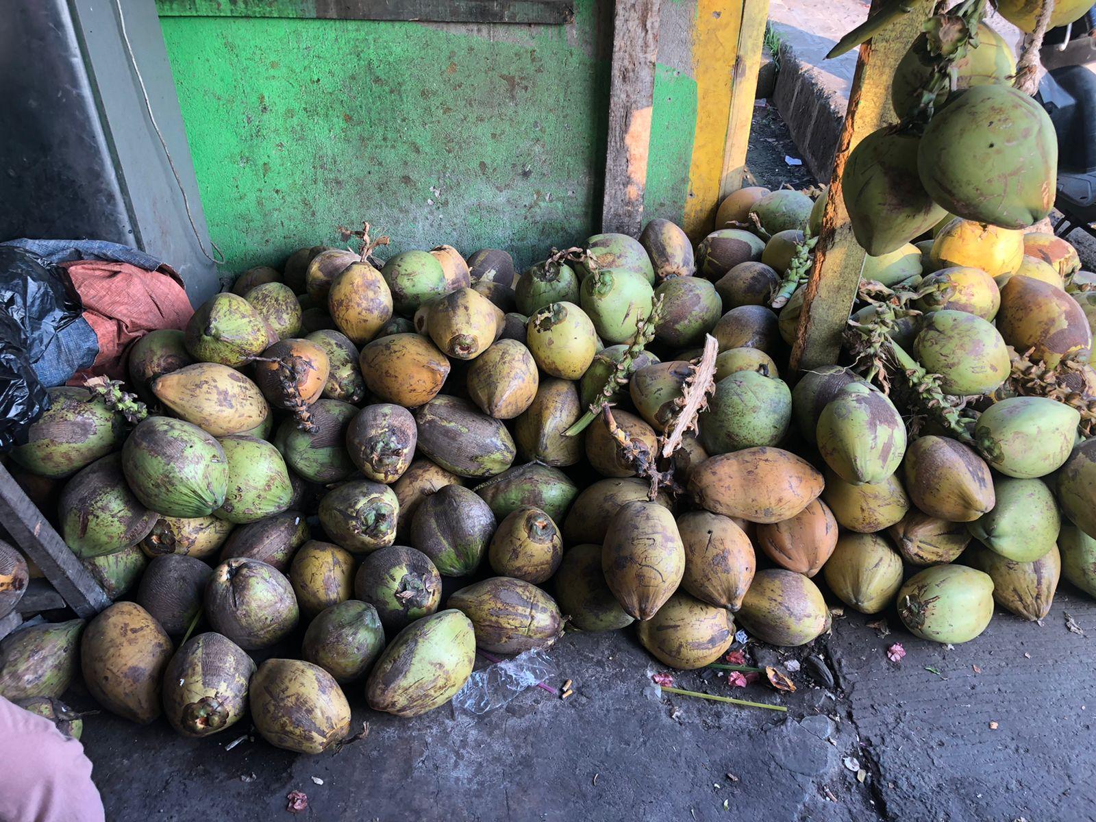 Sejumlah kelapa yang ispa untuk dijual.