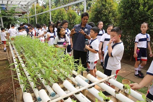 Program Green School Paramount Land,