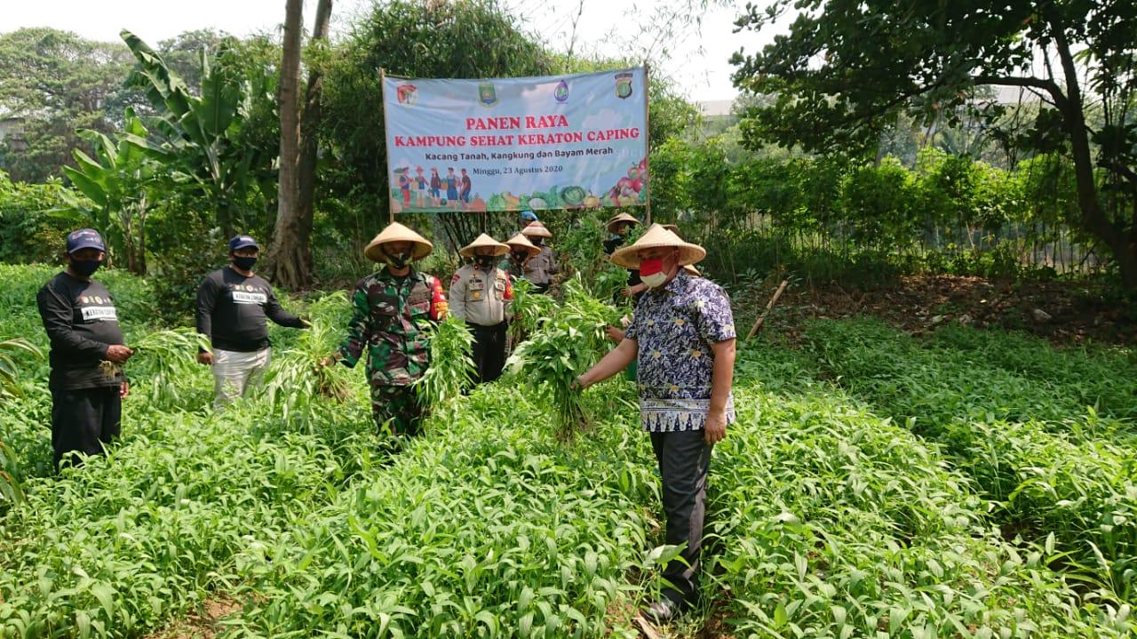 TNI-Polri dan perwakilan Pemerintah Kota Tangerang sedang memanen hasil tanaman di bantaran sungai Cisadane di Banksasuci, Cibodas, Kota Tangerang, Minggu (23/8/2020).