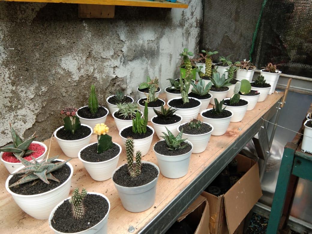 Berbagai jenis tanaman kaktus di Ciq's Rumah Kaktus Cikokol, Kota Tangerang, Minggu (4/4/2021).
